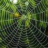 Image: Unraveling Silks' Secrets