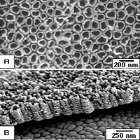 A) Titania nanotubes at 200 nanometer size. Top view.